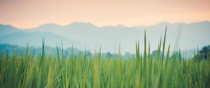 Grass Scape - widescreen wallpaper