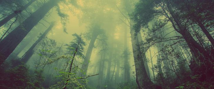 Forest-Fog Ultrawide Wallapaper